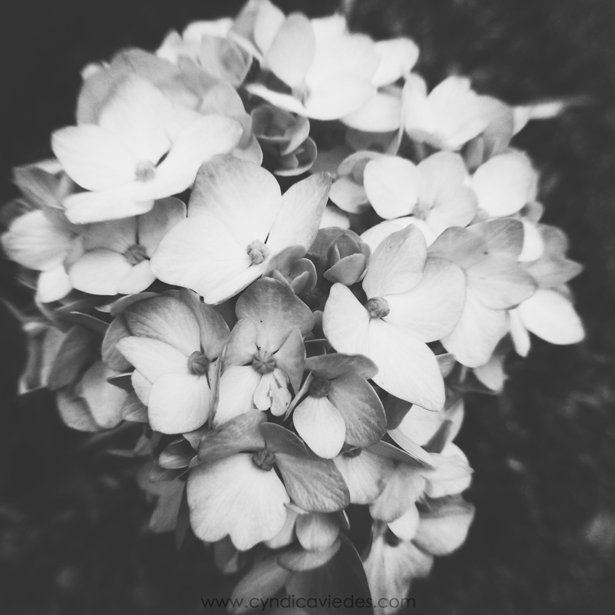 cyndi_caviedes_flowers_black-and-white